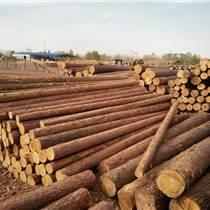 滿洲里木材加工批發,俄羅斯樟子松原木,樟子松防腐木,滿洲里志立木制品貿易有限公司