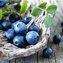 潍坊蓝莓采摘节