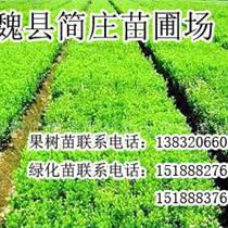 邯郸绿化苗,邯郸绿化苗厂家,魏县简庄苗圃场