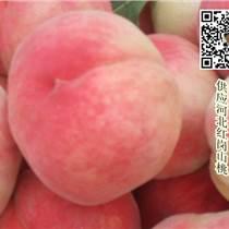大量供应河北保定桃子 量大质优价格合理