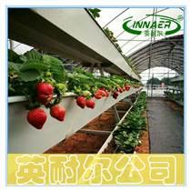 PVC新料草莓种植槽 无土基质栽培槽
