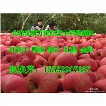 山東紅富士蘋果產地 紅富士蘋果上市價格
