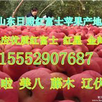 山東蘋果產地上市價格 紅富士蘋果種植基地