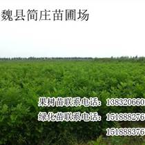 邯郸绿化苗,邯郸绿化苗价格,魏县简庄苗圃场