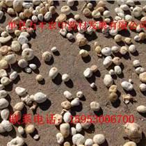 旱半夏种苗批发量大从优质量保证