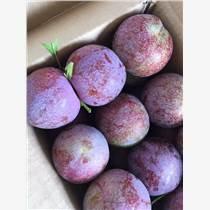 水果批发商