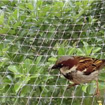 双向拉伸网/挡鸟网/植物爬藤网