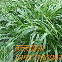供應進口草種 綠化草種 草坪種子 牧草種子 花卉種子