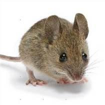 灭鼠秒速赛车 黄浦灭鼠秒速赛车 上海灭鼠秒速赛车