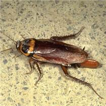 灭蟑螂 长宁上门灭蟑螂服务