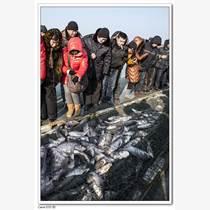 查干湖魚價格,查干湖魚多少錢一斤,查干湖魚批發團購
