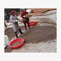 廣西杉樹種子批發供應基地速生杉樹種子多少錢一斤