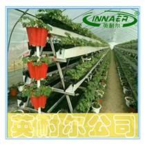草莓种植槽 无土基质栽培槽 蔬菜种植槽