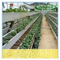无土基质栽培槽 草莓A字架种植槽 英耐尔制造