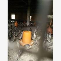 喜迎珍禽脫溫山雞養殖技術 脫溫山雞價格 山雞