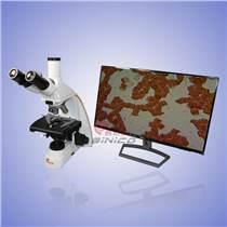 西尼科仪器 三目/双目/微生物显微镜