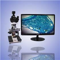 西尼科仪器供应血液观察/细胞观察/血液分析显微镜