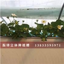 邯鄲生態環保草莓種植槽價格