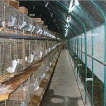 國興水產畜牧養殖溫室建造