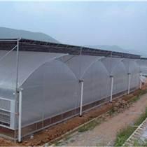 國興薄膜連棟溫室 連棟溫室大棚