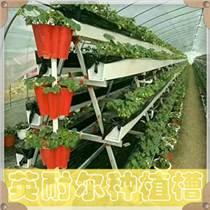 草莓槽 優質草莓立體種植槽 無土栽培槽