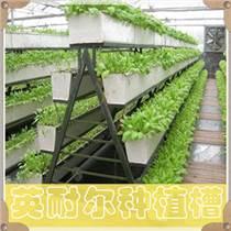 溫室基質槽 草莓立體種植槽 可定制