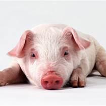 选用优农康微生态饲料添加剂养猪催肥饲料配方可降低成本