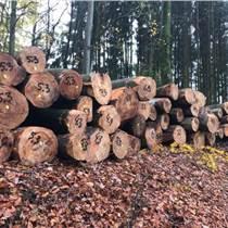 供應旋切級法國櫸木質量優長期合作的老客戶