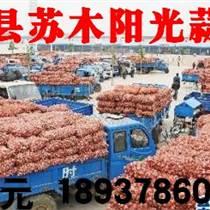 杞县苏木阳光蒜业大量供应杞县大蒜