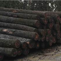 尚高木業供應白蠟木實木板俗稱水曲柳,用于各類運動器材