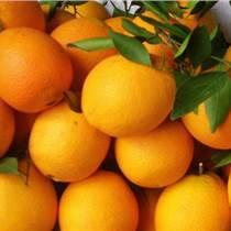 水果代銷 桃子 李子 桔子 香瓜 臍橙