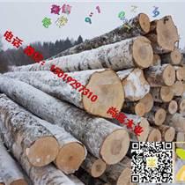 尚高木業供應AB級俄羅斯新鮮砍伐樺木原木貨到滿洲里