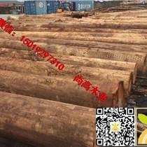 尚高木業供應旋切級巴西玫瑰桉木,直徑30以上去皮