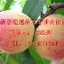 陕西哪里有卖【桃树苗】的