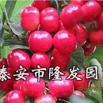 贵州樱桃苗咨询