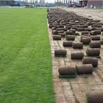 平谷园林绿化批发北海道黄杨竹子月季施工公司