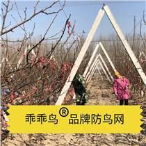 乖乖鸟牌防鸟网果园尼龙网葡萄网樱桃网稻谷鱼塘防护网天
