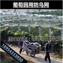 乖乖鸟牌防鸟网果园尼龙网葡萄网稻谷鱼塘防护网天网