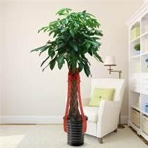 室内绿化装饰哪家好就找勤依园,价格优惠,服务周到