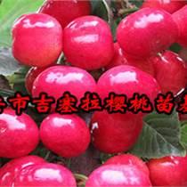 湖南矮化蘋果苗價格