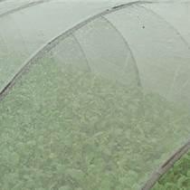 河北蔬菜防虫网规格博众丝网厂家