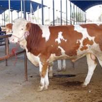肉牛品种;肉牛犊价格;西门塔尔牛价格