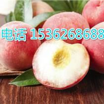 代銷桃子 油桃 毛桃 水蜜桃、黃桃