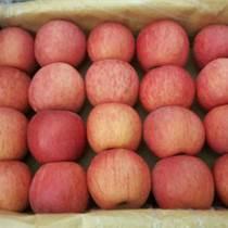 供應陜西冷庫紅富士蘋果價格/出售陜西紅富士蘋果
