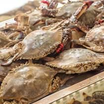 福州怎樣進口活海鮮比較節省時間