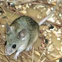 威海虫控公司 威海消杀公司 专业灭鼠杀虫服务公司