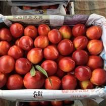 陕西油桃价格,油桃价格行情