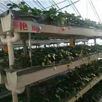 大棚草莓種植槽,基質肥種植槽