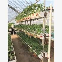 草莓立體種植架,白色壁掛種植槽