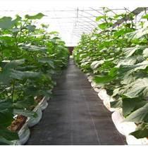 編織防草布廠家熱銷寬0.5-4米果園防草地布抗曬除草